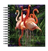 ECOeverywhere Watchful Flock Picture Photo Album, 18 Pages, Holds 72 Photos, 7.75 x 8.75 Inches, Multicolored (PA11642)