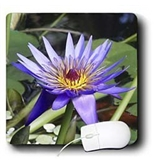 Edmond Hogge Jr Floral - Purple Water Lily - Mouse Pads