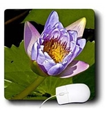 Jerry Funk Photo Artisan Flowers - Decorative colorful garden botanic classic plant water lily purple green flower - Mouse Pads