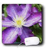 Lenas Photos - Flowers - Amazing vivid purple flower - Mouse Pads [Electronics]