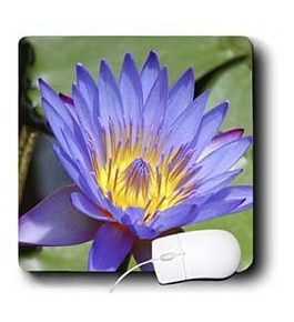 Florene Flower - Purple Water Lily - Mouse Pads
