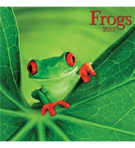 Perfect Timing - Avalanche, 2013 Frogs Wall Calendar (7001507)