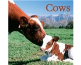 Perfect Timing Avalanche 2013 Cows Wall Calendar (7001528)